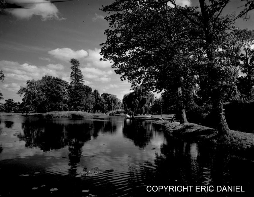 les étangs du parc 7